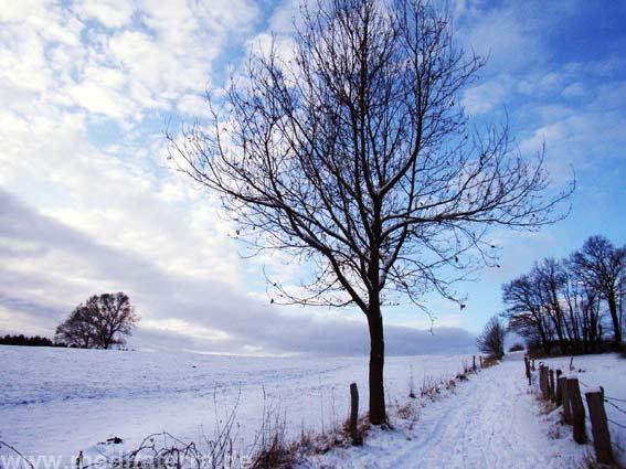 """In der landschaftlichen Umgebung des """"Kunstretreats"""" war einst der französische Poet und Kunstkritiker Giullaume Apollinaire spazieren gegangen."""