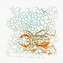 Saskia van Montfort 1, The Netherlands, Stag Beetle, 2016, Screenprint, 13 x 13 cm