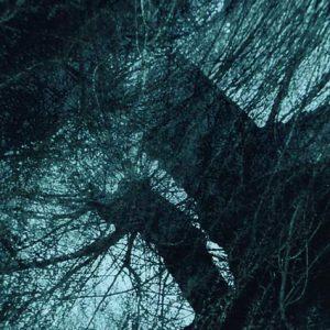 """Detail aus dem Bild """"Magic Forst"""" von Serge Koch, Luxemburg"""