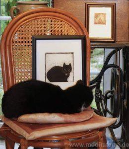 Das Wohnen mit Katzen und Bildern genießen!