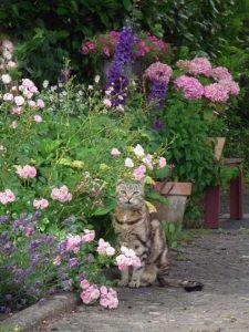 Schöne Tigerkatze