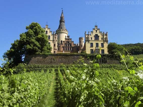 Weinbau am Rhein - Schloss Arenfels