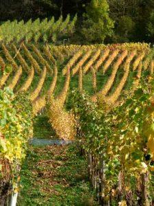 Mayschoss Rotweinwanderpfad