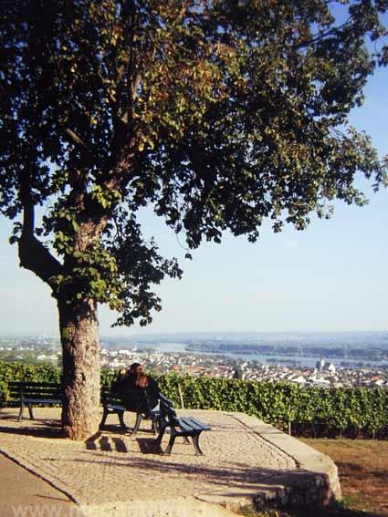 Goethe-Blick am Rhein