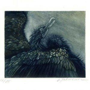 Oya Pekmener 1, Turkey, Cormorant, 2017, Mezzotint Print, 15 x 12 cm