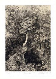 Jelena Petrović Luković 1, Serbia, Laurel Tree, 2018, Digital Print, 20 x 16 cm