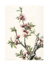 Sirkka Laakkonen, 1, Finland, Spring, 2012, Chinese Brush Painting, 20 x 29,7 cm