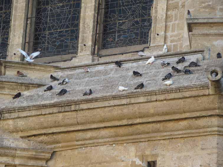 Tauben an der Kathedrale von Malaga
