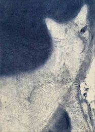 Kana Kobayashi, Japan, CAT, 2020, etching, 21 x 15 cm