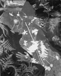Dan McCormack, USA, Nadine_L_07-05-17–06, 2017, photogram, 76,20 x 101,60 cm
