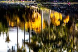 Evan Siegel, USA, Kimberly Pond 1, 2018, digital photograph, size scalable