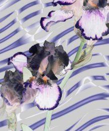 Mae Jeon, USA/South Korea, Healing Wave, 2015, digital Art on metal, 60,96 x 50,8 cm
